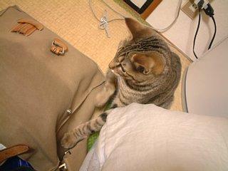 鞄の中には何がある?