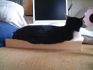 猫かまぼこ