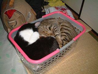 猫弁当(ななめから)