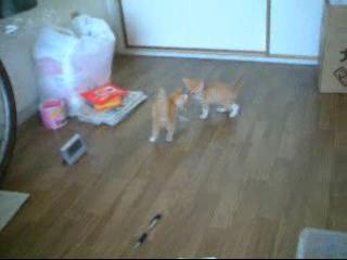 駆け回る仔猫