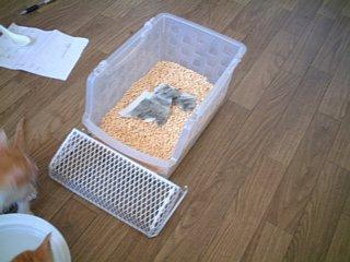仔猫用トイレ