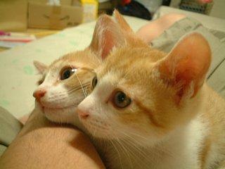 ひざのり仔猫